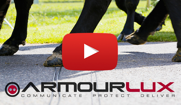 ArmourLux tested by cows