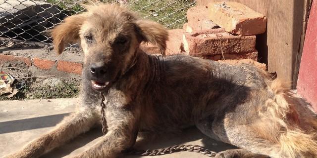 Himalayan Animal Treatment Centre UK 1