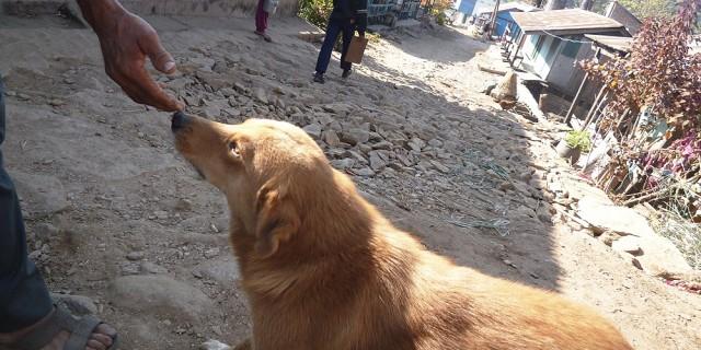 Himalayan Animal Treatment Centre UK 2