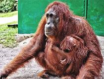 Planting 100 trees in Borneo